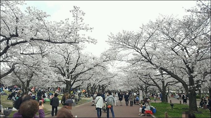 4月6日 桜まつり